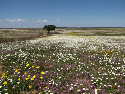 Castro Verde, Portugal, an island of nature in a sea of intensive agriculture