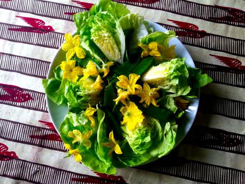 Fresh vegetable and flower salad! Photo: Ingrid