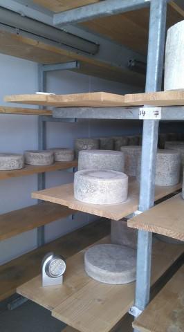 cheese making with yfoee 2