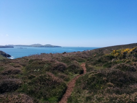Coastal path on the walk to St. Davids' (c) Lili Balogh