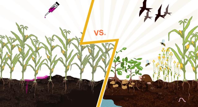 Monoculture Versus Crop Rotation