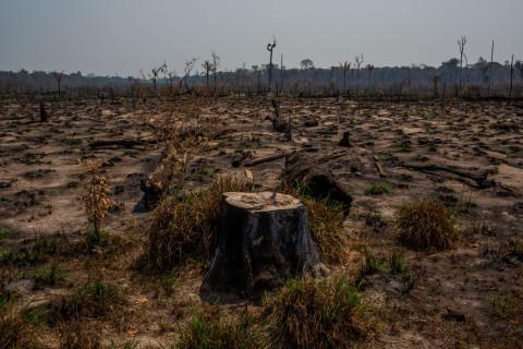 Deforestation in the Amazon. (C) Victor Moriyama
