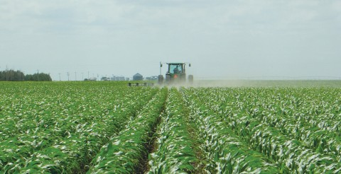 Herbicide resistant crops   Friends of the Earth Europe